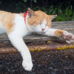 唐沢山神社の寝てる猫