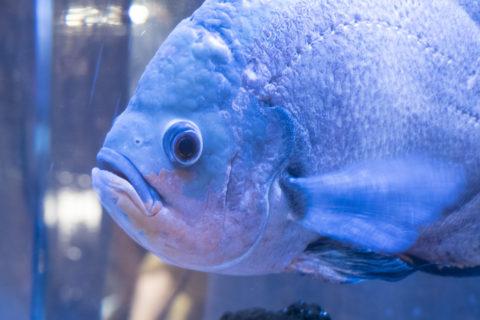 アウルの森 魚