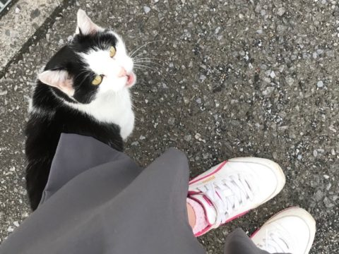 こっちを見る猫