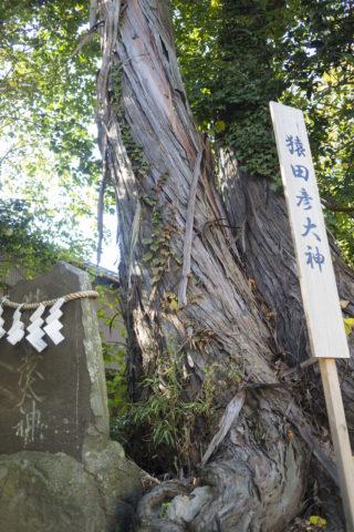 平柳星宮神社 御神木