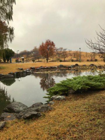 いせさき市民のもり公園の池