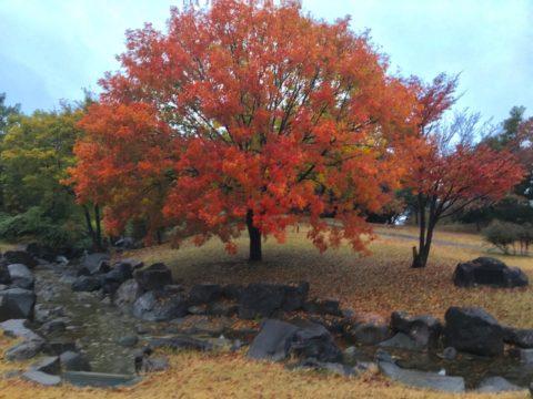 いせさき市民のもり公園の紅葉
