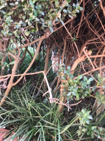 植木の中に子猫