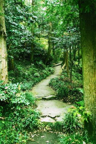 涌釜神社の抜け道