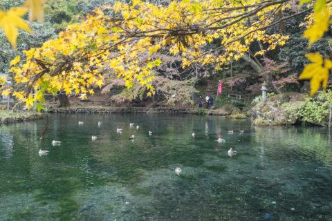 紅葉と水面