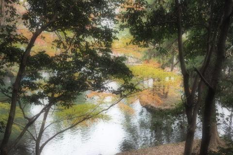 出流原弁財池の散策路からの景色