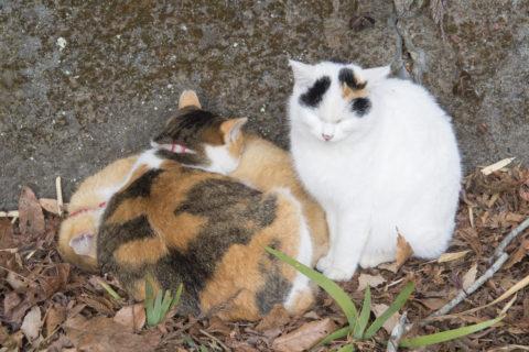 寝てる三毛猫とトラ猫