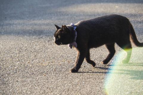 夕日に照らされた黒猫