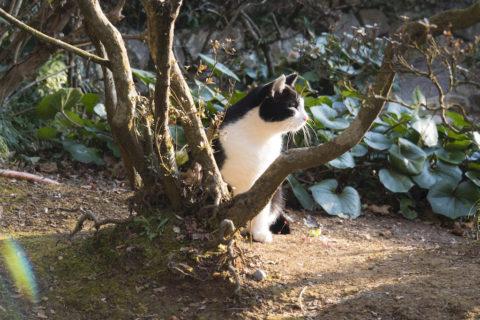 横を向くブチ猫