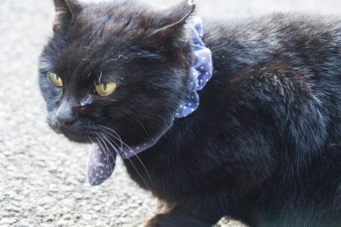 黒猫のアップ