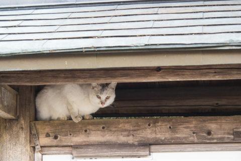 こんなとこに猫がいた