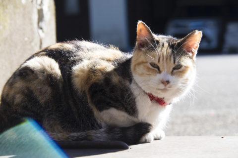 最初に撮った猫