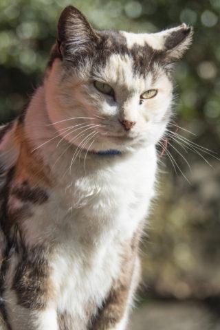 玉ボケ背景の猫