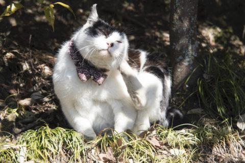 顔をかく猫