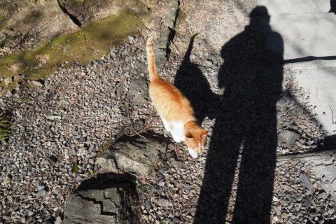 私の影と猫