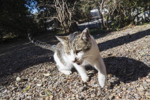 餌を求めて動く猫