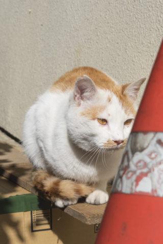 目が綺麗な猫