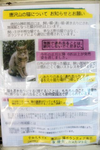 猫の貼り紙