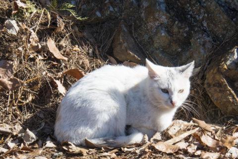 足尾山神社の近くにいた猫