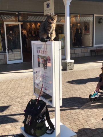 旅猫さくら