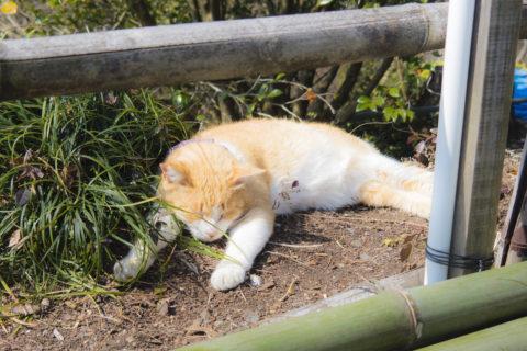 すごい姿勢で寝る猫