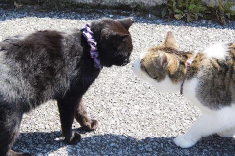 仲良し猫ちゃんたち