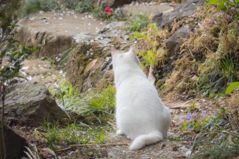 太山寺にいる猫