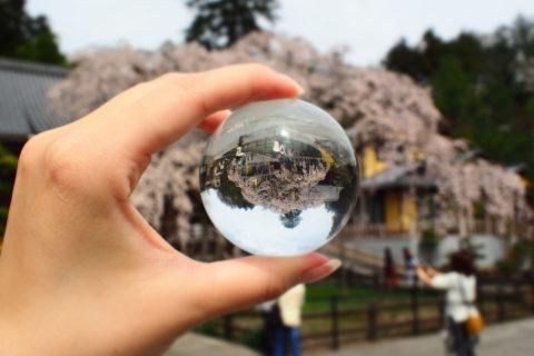 水晶玉から見る桜