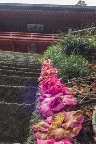 随神門の階段に添えられてる椿