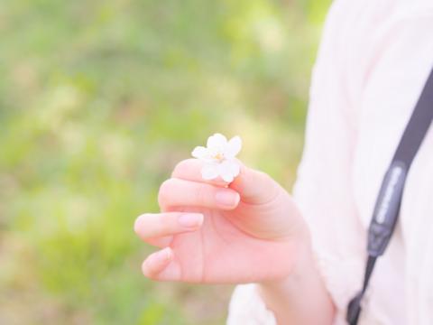 桜の花と私の手