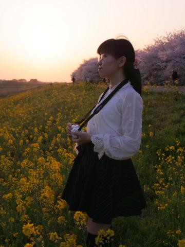 桜と菜の花と夕陽