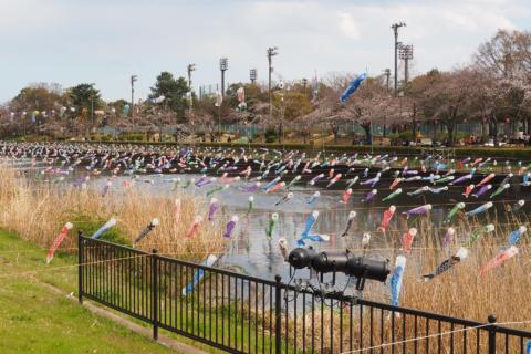 鯉のぼりのお祭り