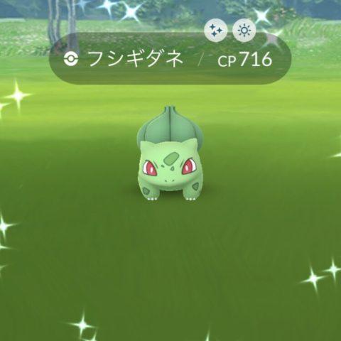 黄緑色のフシギダネ