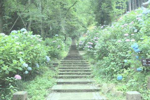 大中寺までの階段