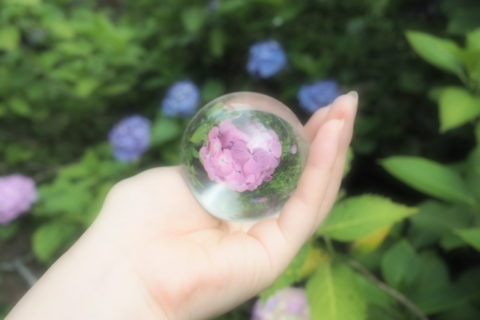 紫の紫陽花と水晶玉