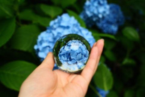青い紫陽花と水晶玉