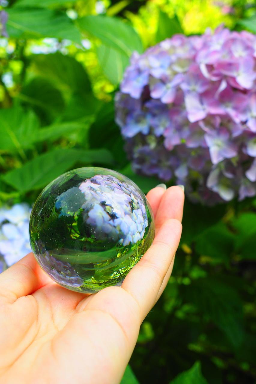 水晶玉越しの紫陽花