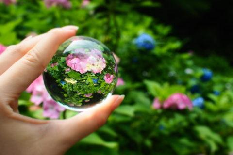 ピンクの紫陽花と水晶玉