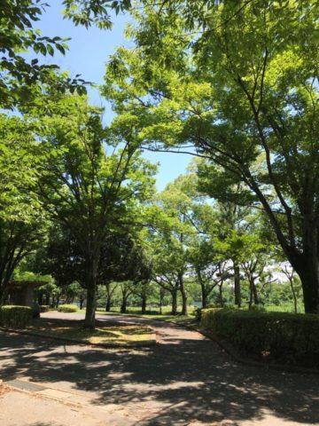 つつじヶ丘公園第二