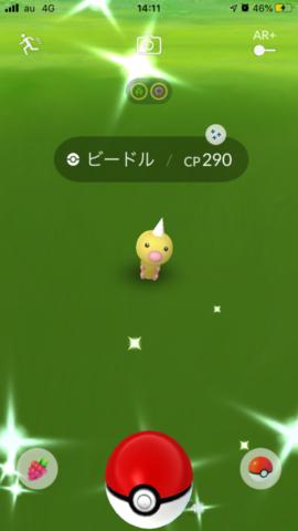 黄色いビードル