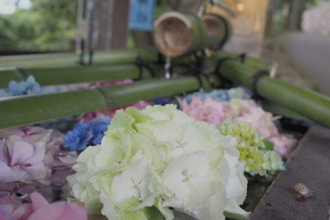 紫陽花の花手水アップ