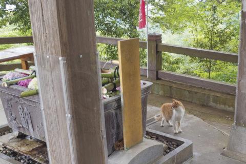 花手水と猫