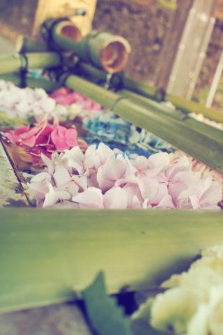 唐沢山神社の花手水