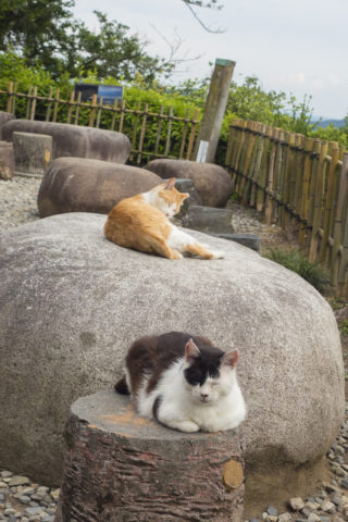 寝てる猫2匹