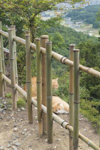 崖の上の猫2匹