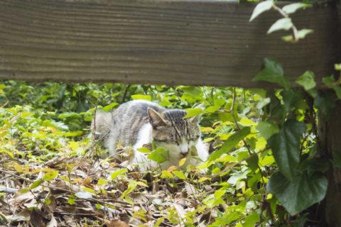 草むらで寝てる猫