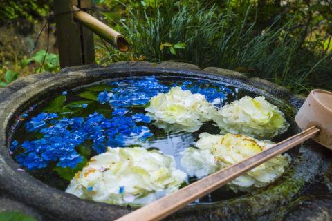 紫陽花のミニ花手水