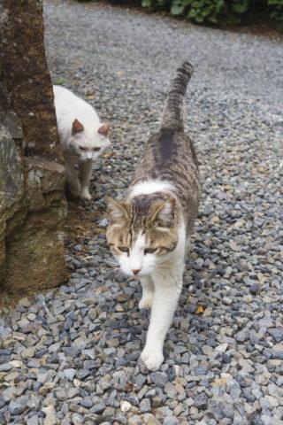 歩く猫たち