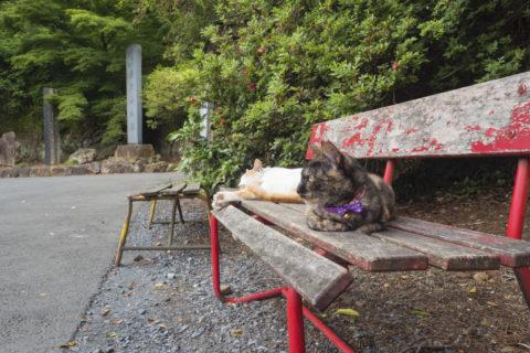 ベンチの上の猫2匹