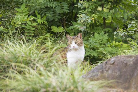 草むらから猫